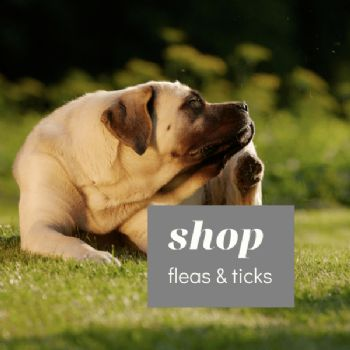 Flea and Tick Treatments